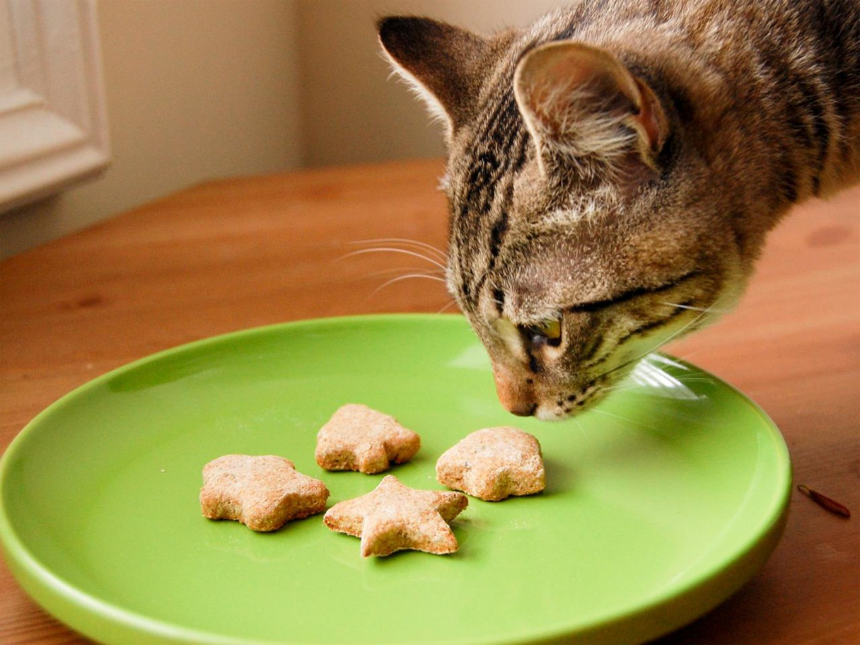 Can cats just eat biscuits