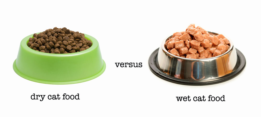 How often do you feed your cat wet food