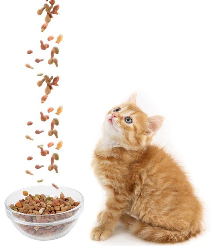 Kitten only wants dried foods problem