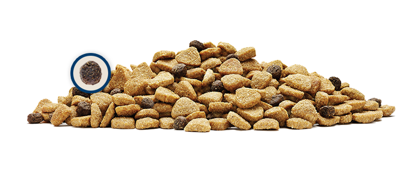 Things to Know about Cat Dry Foods