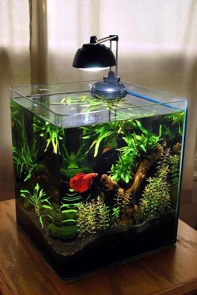 How big of a tank do you need for a betta fish