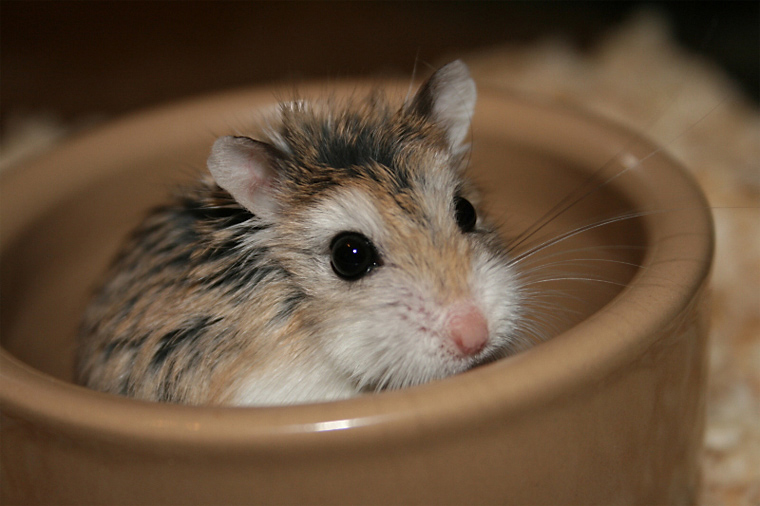 What fruits and vegetables are safe to feed hamsters