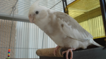 What is The Best Kind of Parrot to have as a Pet in Your Home?