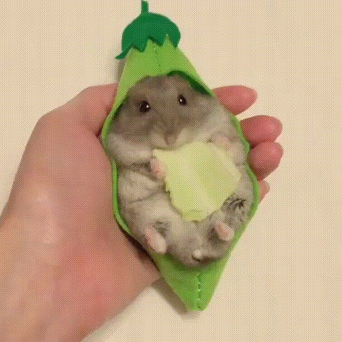 Can hamsters eat avocados