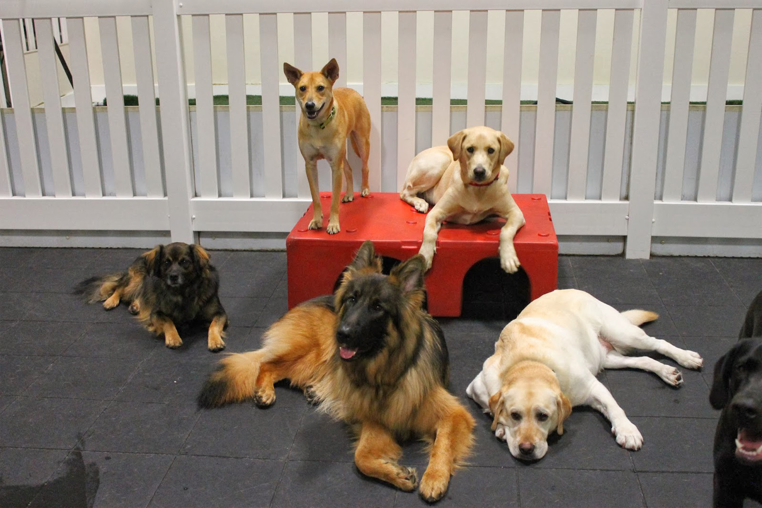 Four Reasons Why You Should Put Your Dog in a Doggie Daycare Center