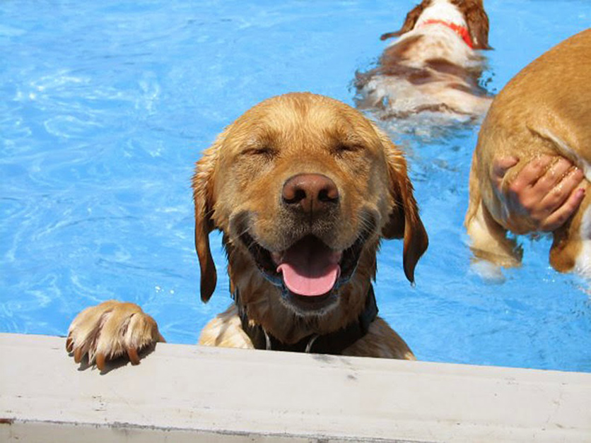 The Average Cost of a Dog Daycare Center
