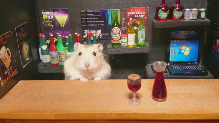 Can hamsters drink water from a bowl and not a water bottle