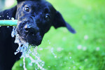 Why Does My Dog Drink So Much Water? You Better Be Aware of a Condition like This