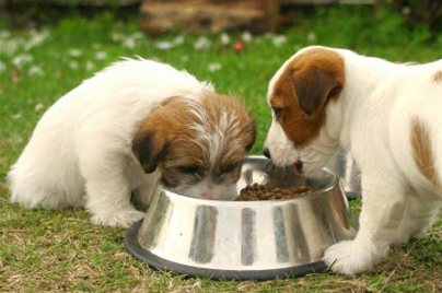 What Is The Best Dry Dog Food for Small Breeds